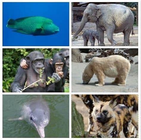 imagenes animales y plantas en peligro de extincion lista de animales en peligro de extinci 243 n las causas y