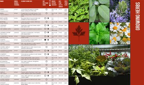 container gardening guide free container gardening guide garden365