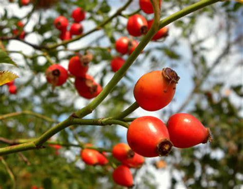 amuses met bloemen eetbare planten uit de siertuin vruchten en bessen om op