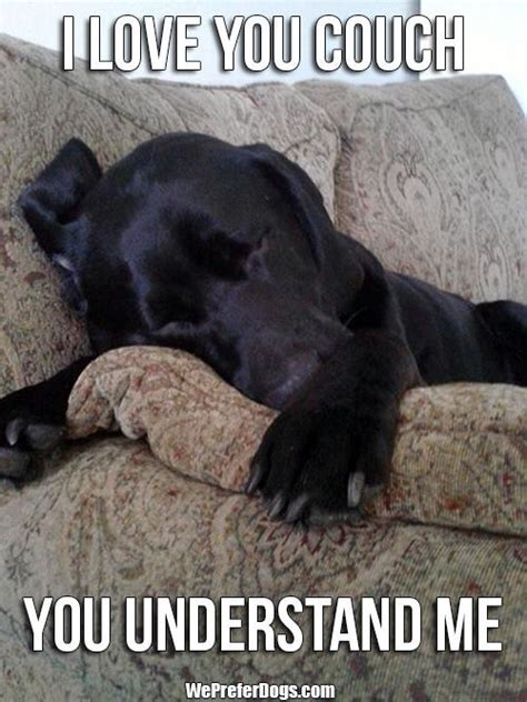 Labrador Meme - 12 hilarious labrador memes will make your day