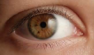 what is the rarest eye color my eye color i a eye color story experience