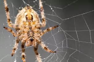 Garden Spider Washington State Washington Spider Flickr Photo