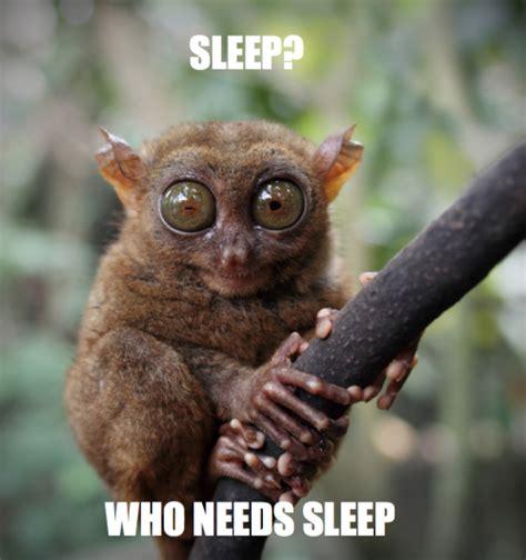Funny Memes About Sleep - nat geo animal memes tumblr
