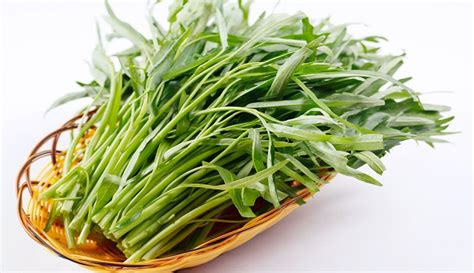 wikipedia tanaman tanaman obat alami  wasir