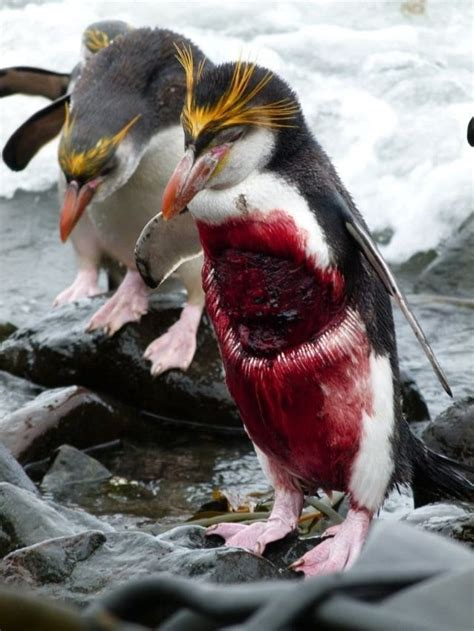 deadly animal fights  results show survival   fittest  fatal  times