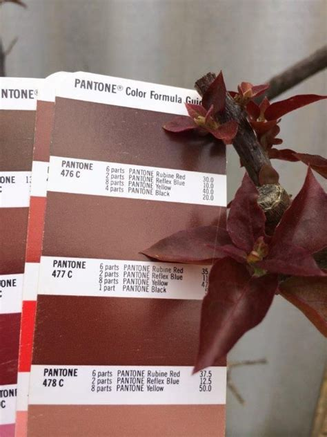 pantone 476c pms colour matching 476 478c pms colour matching
