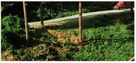 garten räume gestalten tannenb 228 ume und l 228 rchen und andere nadelh 246 lzer seite 3