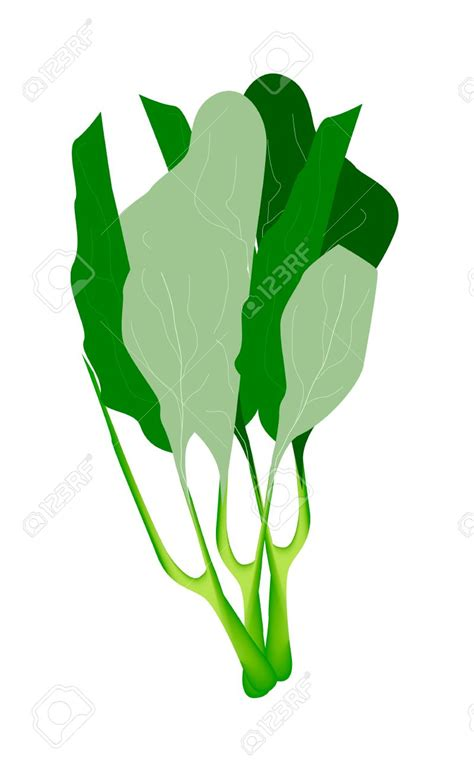 and clipart broccoli clipart vegetable plant pencil and in color