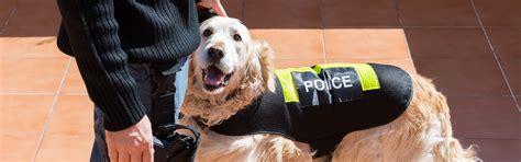 Do Cops Need A Warrant To Search Your Car When Do Cops Need A Warrant To Use Sniffing Dogs