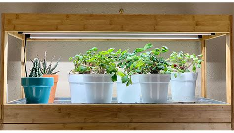 growing vegetables indoors  led grow lights