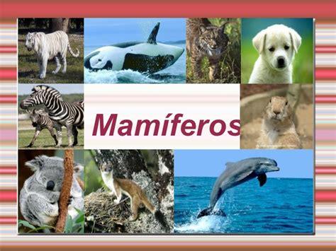 imagenes sorprendentes de animales extraños animais mamiferos