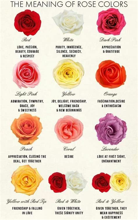 what different colors mean 33 best images about flower meanings on pinterest