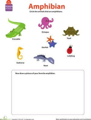 Hibians Worksheet by Critter Classification Hibians Worksheet Education