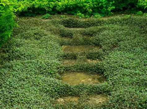 Plantes Tapissantes Sans Entretien by Couvre Sol Facile D 233 Couvrez L Acaena Blue