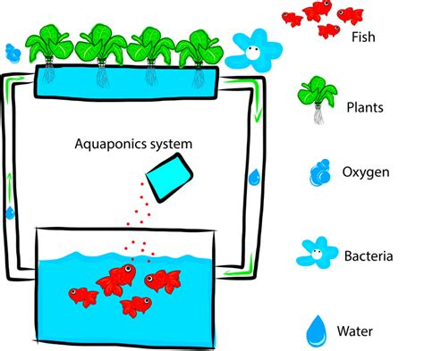 aquaponics diagram diy everything you need to to build a simple