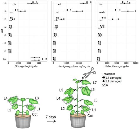 theory and pattern in plant defense allocation frontiers cotton defense induction patterns under
