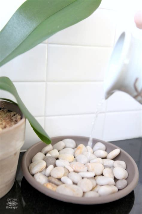blooms beautiful   diy orchid humidity tray garden therapy