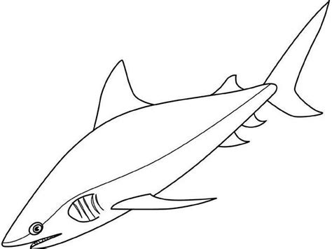 littlest pet shop sharks coloring pages