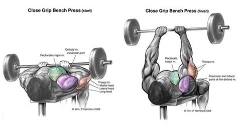 barbell close grip bench press 6 exercises to get perfectly shaped triceps gymguider com