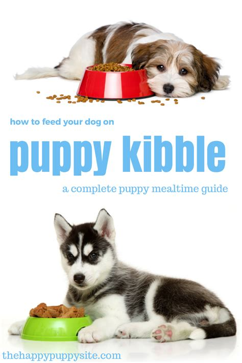 pup website how to feed your puppy on kibble the happy puppy site