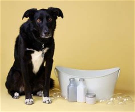 baking soda bath for dogs for dogs pets and sodas on
