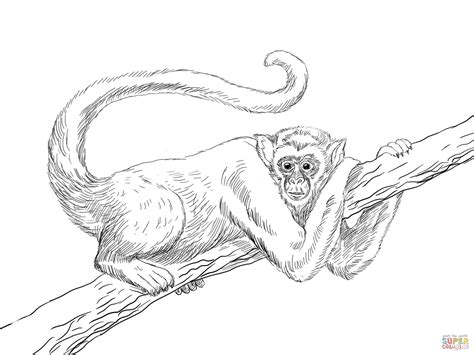 Muriqui or Wooly Spider Monkey coloring page | Free ...