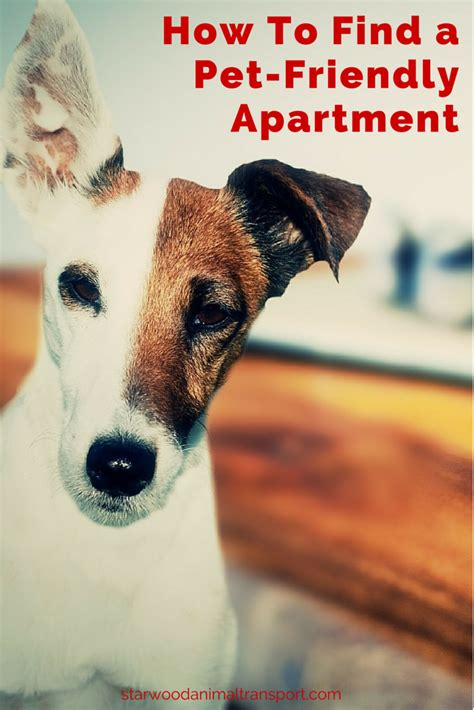 pet friendly appartments moving a pet tips for finding a pet friendly apartment