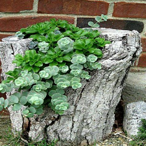 Tree Log Flower Planter by 49 Best Images About Garden Flower On Trees