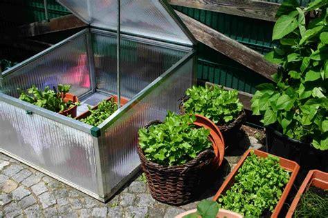 orto terrazzo orto sul balcone orto in balcone come coltivare l orto