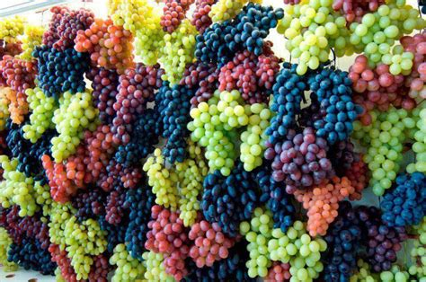 Shape Shifting by Perfect New Grapes To Eat Amp Drink Beautifulnow