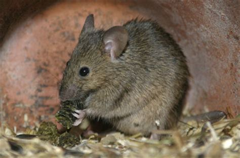 Garden Mouse by Mouse About Gardens