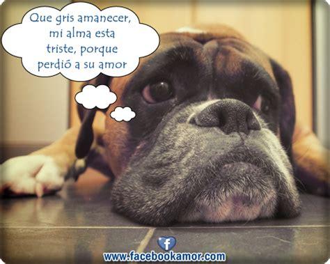 imagenes tristes de amor con animales 02 20 13 imagenes bonitas para facebook amor y amistad