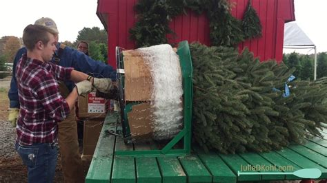 romance christmas tree farm romance arkansas youtube