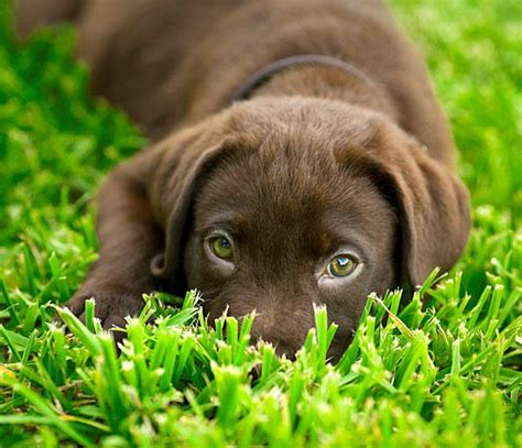 puppy slideshow puppy names and meanings slideshow breeds picture