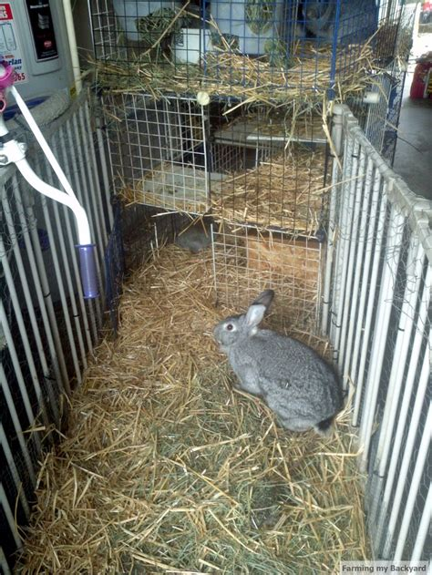 backyard meat rabbits 78 best images about rabbits on pinterest raising new zealand and rabbit hutches