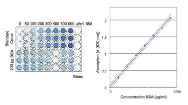 protein quantification validation of protein quantification assays