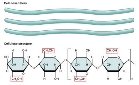 3 carbohydrates exles chain of glucose molecules best chain 2018