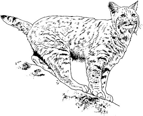 printable coloring pages of wild cats big cat coloring pages