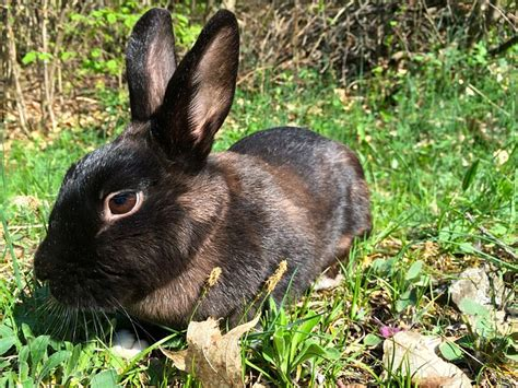 Rabbit Heat L by Home Roost How To Help Your Rabbits Stay Cool This Summer