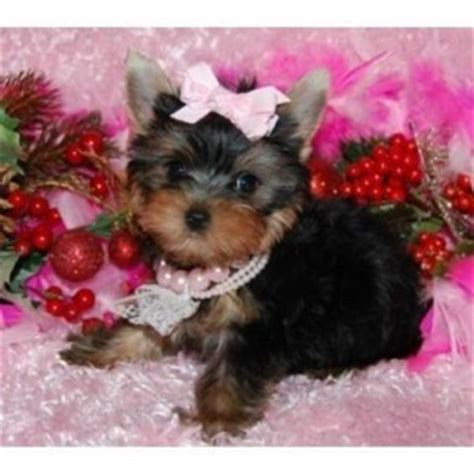 free puppies in albuquerque pets albuquerque nm free classified ads