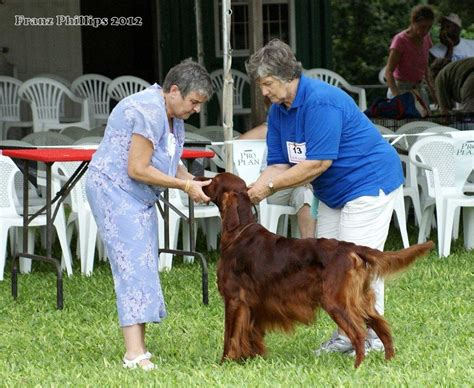 irish setter dog group barbados kennel club s second all breeds chionship dog