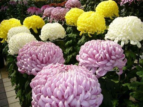 fiori per i morti i fiori dei morti immagini