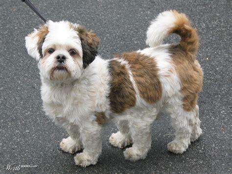 legged dogs image gallery six legged