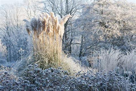 garten winter stauden im winter verzauberter garten gartentechnik de