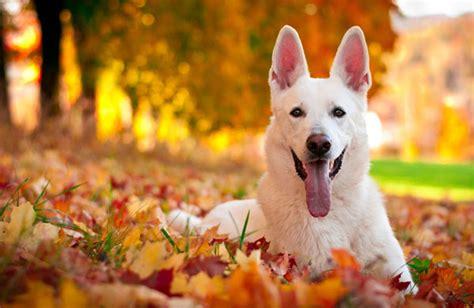 do dogs a sense of time do your dogs sense when fall arrives