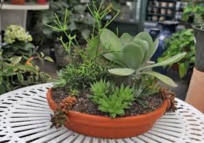 planters for succulents succulent planters idea book drought tolerant planters