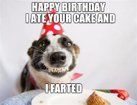 Birthday Cake Dog Meme - 70 funny birthday wishes for best friend male allupdatehere