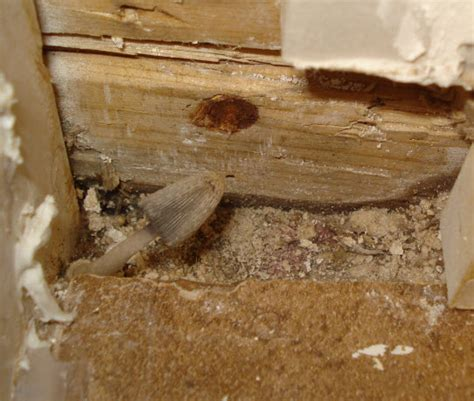 bathroom mold issues pro construction forum be the pro