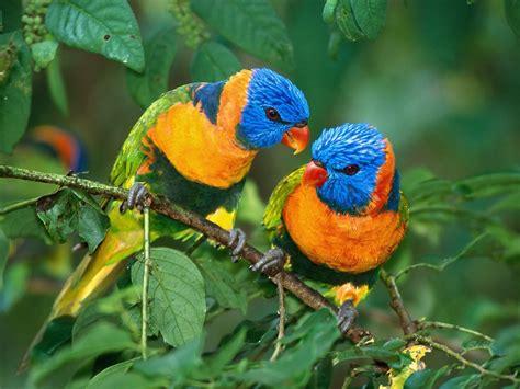 Parrot L by 1000 Images About Parrots On