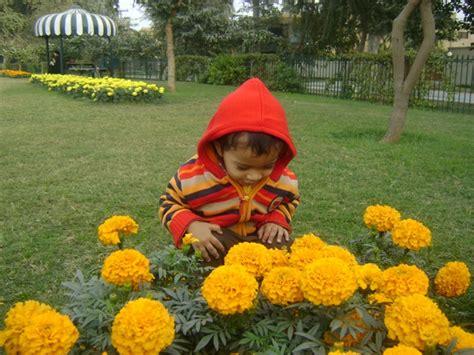 the little gardener the little gardener